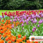 Keukenhof, el jardín de flores más grande del mundo