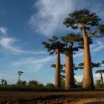 7 de los países con más biodiversidad
