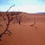 Médanos de Coro, hermoso desierto para admirar y disfrutar