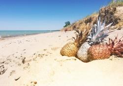 piñas en la playa