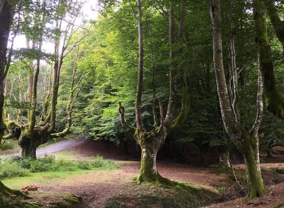 DESTINOS OTOÑO EN ESPAÑA - Parque_Natural_Gorbeia