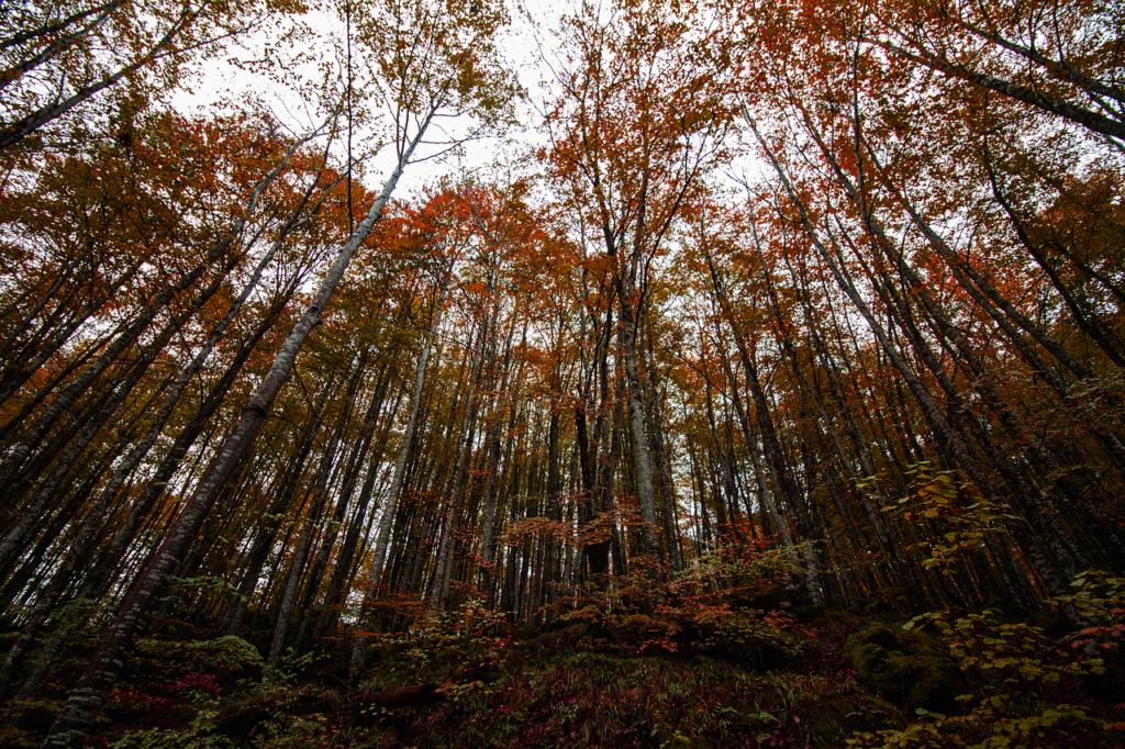 DESTINOS OTOÑO EN ESPAÑA - Selva de Irati
